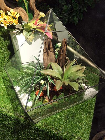OVOCAFE 植物