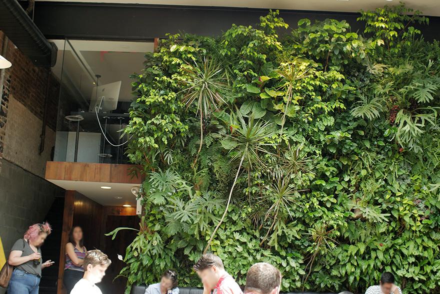ニューヨーク 旅行 DEVOCION デボーション カフェ ブルックリン