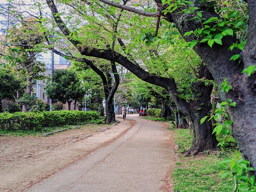 家キャンプ中に近所の緑道を散歩